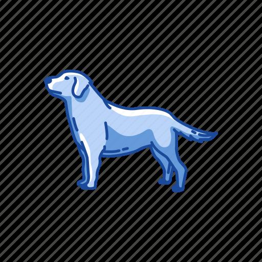 animals, dog, golden retriever, gun dog, labrador, mammal, pet icon