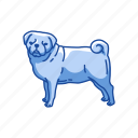 animals, canine, dog, mammal, pet, pug, terrier icon