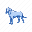 animals, bloodhound, dog, hound, hunting dog, mammal, pet icon