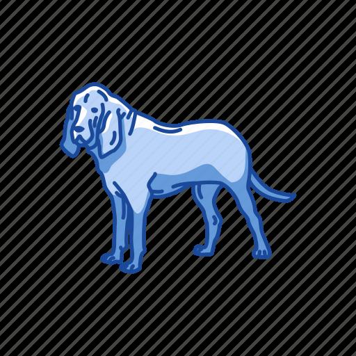 animals, bloodhound, dog, hound, hunting dog, mammal, pet icon