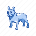 animals, bostos terrier, dog, mammal, pet, puppy icon