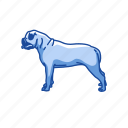 american bulldog, animals, bulldog, dog, hefty dog, mammal, utility dog