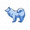 animal, dog, japanese spitz, mammal, pet, spitz, terrier icon