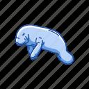 animal, aquatic mammal, dugong, mammal, sea cow, sirenia