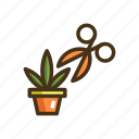harvest, marijuana, plant, scissor