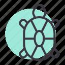 marine, sea, tortoise, turtle, ocean