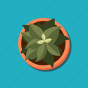 botanic, flower, nature, office, plant, pot icon