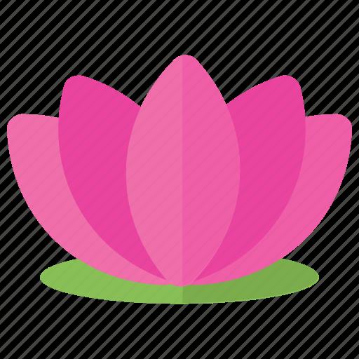 lotus flower, lotus logo, purple lotus, spa flower, water lily icon