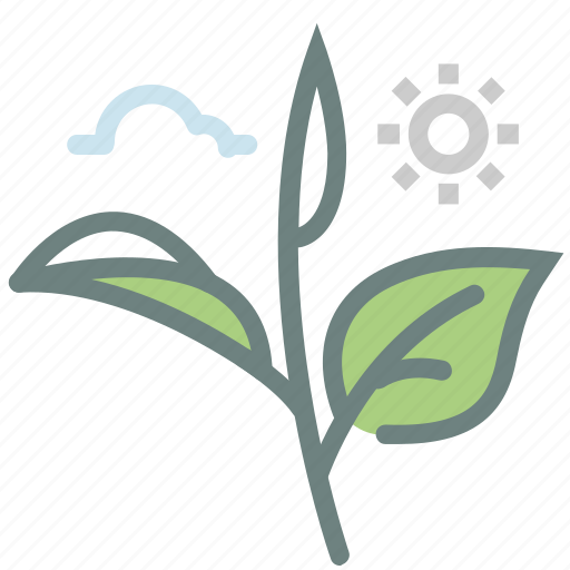 green tea, herb, leaf, leaves, matcha, tea, tea leaves icon