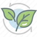 green tea, harvest, herb, leaf, matcha, tea leaf, tea leaves icon