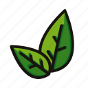 green, leaf, matcha, nature, tea icon