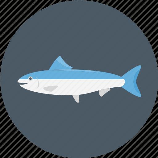 blue salmon, fish, salmon, sea salmon icon