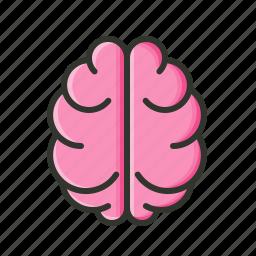 brain, creativity, knowledge, medical icon