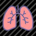 lungs, anatomy, organ, medical, chest