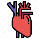 anatomy, heart, human, medicine, organ icon