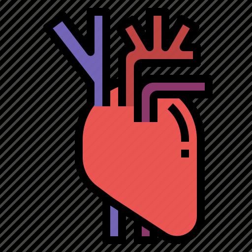 Anatomy, heart, human, medicine, organ icon - Download on Iconfinder