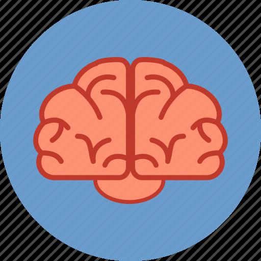 Brain, brainstorm, communication, education, human ...