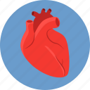 biology, blood, cardio, health, heart, human, vascular