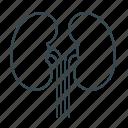 anatomy, kidneys, organ icon