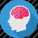 brain, ct, human, human brain, mind, scan