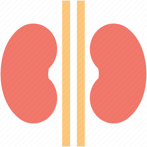 body part, human kidneys, kidneys, organ, renal icon