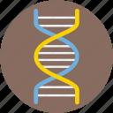 dna, dna chain, dna helix, dna strand, genetics