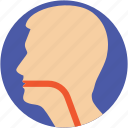 esophagus, human head, larynx, sore throat, throat icon