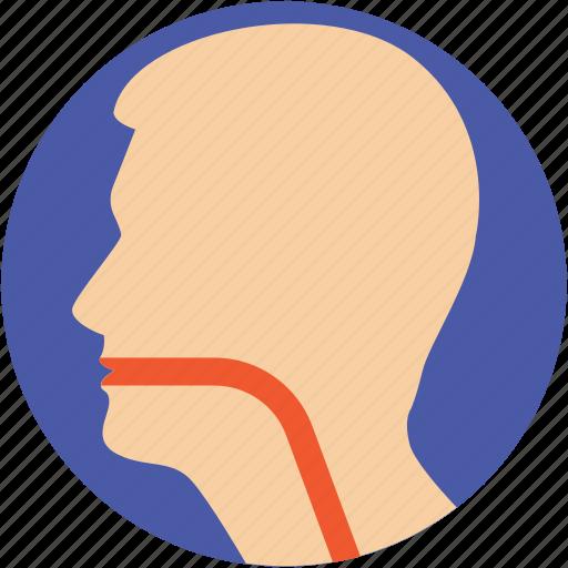 esophagus, human head, larynx, sore throat, throat icon