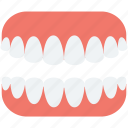 artificial teeth, dentures, human teeth, jaw, teeth icon