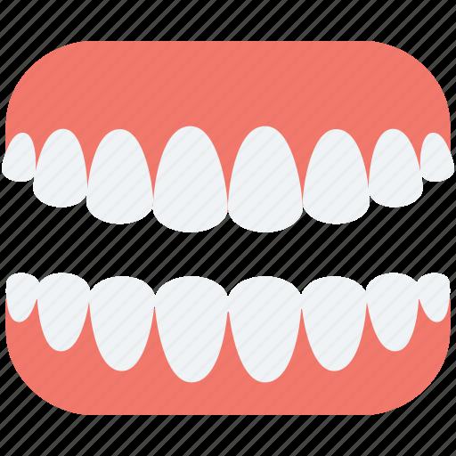artificial teeth, dentures, human teeth, jaw, teeth icon