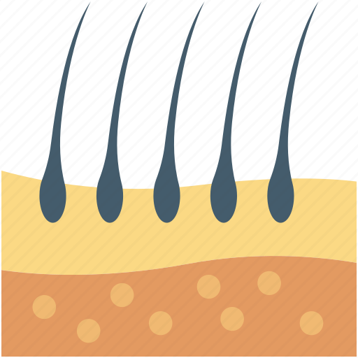 dermatology, epidermis, hair, hair follicle, skin icon