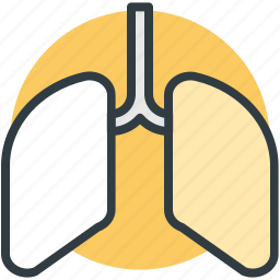 anatomy, breathe, human lungs, lungs, pulmonology icon