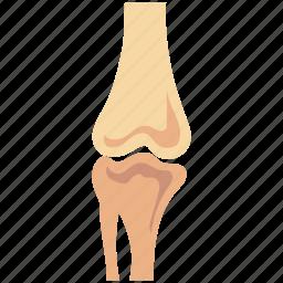 articulation, bone joints, bones, human bones, joints, knee joint, osteoarthritis icon