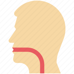 body part, esophagus, pharynx, sore throat, throat, throat anatomy, throat infection icon