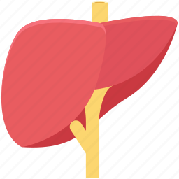 body part, human liver, human organ, liver, organ icon
