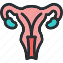 genitals, gynecology, health, medical, ovaries, reproductive, uterus