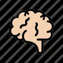 brain, healthcare, medical, mind, neurology