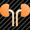 health, human, kidney, medical, organ