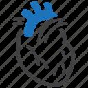 anatomy, cardiology, cardiovascular, heart, human heart icon