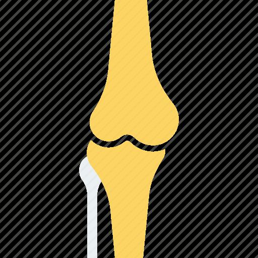 bone, broken, dog, fracture, injury, meal, skeleton icon