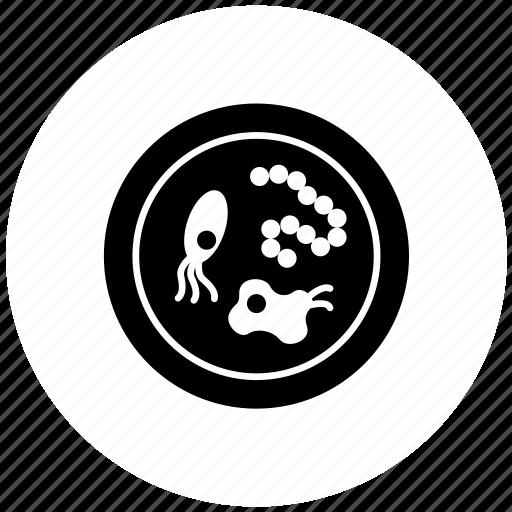 bacterium, medicine, microbiology, petri dish icon