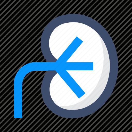 Anatomy, human, kidney, organ icon - Download on Iconfinder