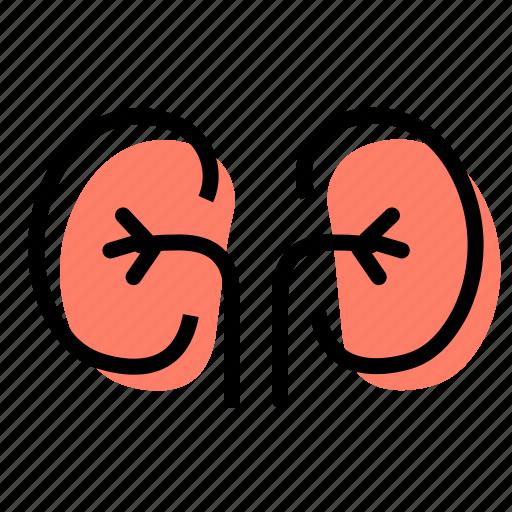 Nephrologist, organs, health, kidneys icon - Download on Iconfinder