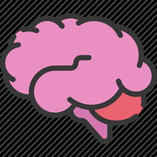 brain, health care, hospital, medical, smart icon