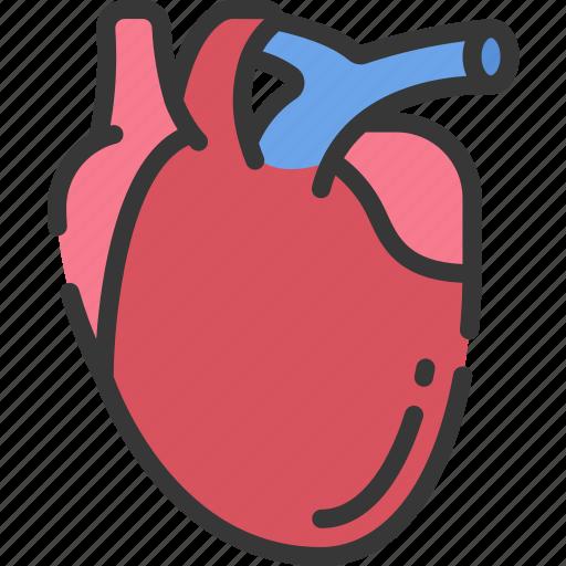 health care, heart, hospital, medical, organs icon