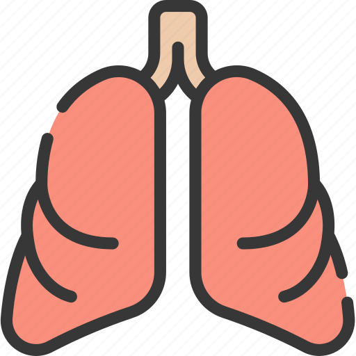 health care, hospital, lungs, medical, organs icon