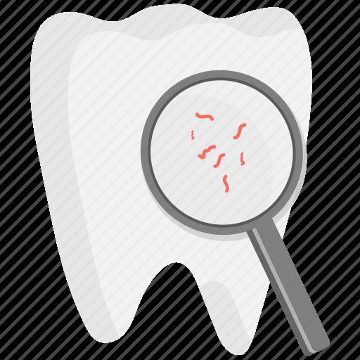 dental, dentist, dentistry, medical, search, teeth, tooth icon