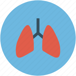 anatomy, breathe, lungs, respiratory icon