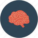 brain, brain mri, ct scan, human brain icon