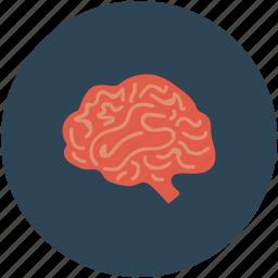 brain, brain mri, ct scan, human brain icon